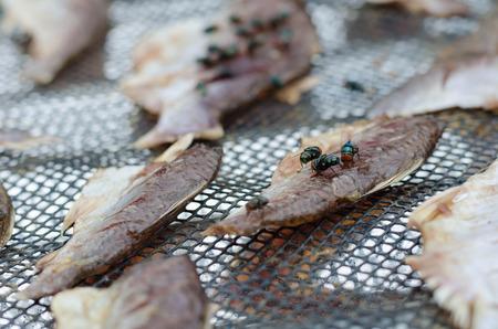 close up group fly eat Dried fish Zdjęcie Seryjne