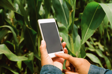 farmer with mobile phone in hands in the corn field