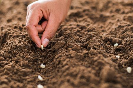 Hand pflanzt Maissamen von Mark im Gemüsegarten