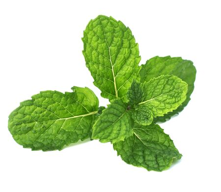 mint isolate on white background