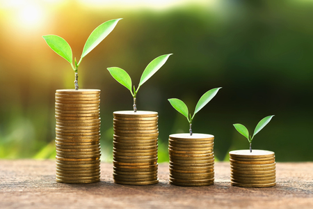 Coins with money growing plant concept finance and banking