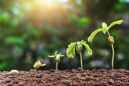 plant seeding growing step with sunlight. agriculture concept in farm Standard-Bild