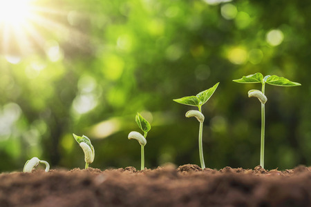 Concept agriculture planting seeding growing step in garden with sunshine Stock Photo