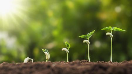 concept landbouw aanplant zaaien groeiende stap in de tuin met zonneschijn