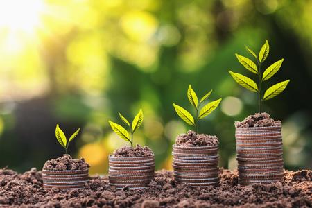 Roślina rośnie na stosie monet z zachodem słońca. koncepcja oszczędzania pieniędzy i finansów biznesowych Zdjęcie Seryjne