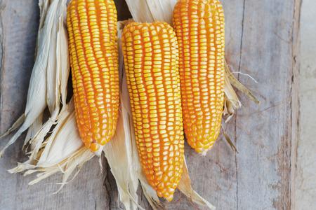 drei reife Mais auf Waldhintergrund Standard-Bild