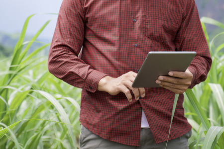 A farmer using tablet computer checking data of agriculture in a sugarcane plantation