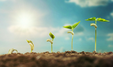 concept agriculture planting seeding growing step with blue sky and sunlight Banque d'images - 106356610