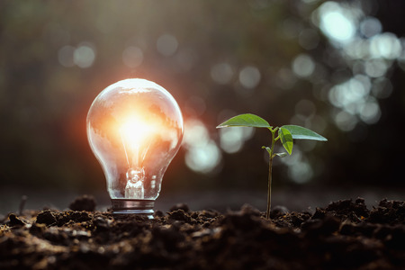 lightbulb and small tree growth on soil with sunset. solar energy concept