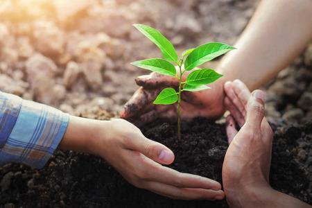 agricultor protección de tres manos plantación de árboles en el suelo con sol en el jardín