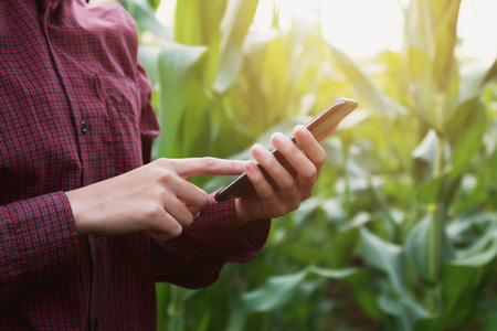 woman farmer using technology mobile in corn field Stock Photo