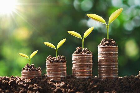 giovane pianta che cresce passo sulle monete. concetto di finanza e contabilità