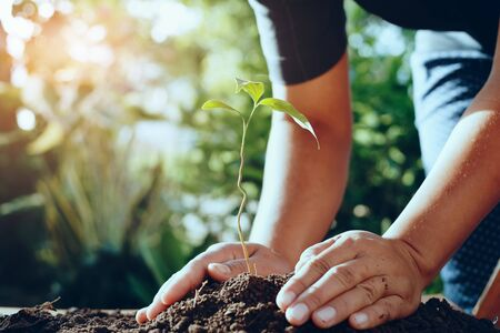 farmer hand planting tree in garden for save world