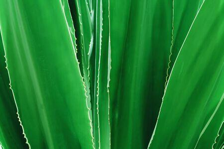 green leaf background texture Stok Fotoğraf