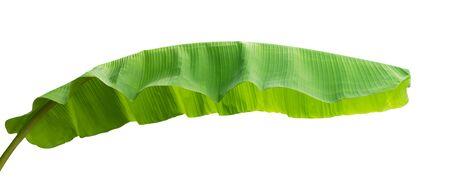 banana leaf isolate on white background