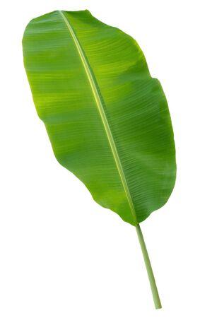 banana leaf isolated on white background Stok Fotoğraf