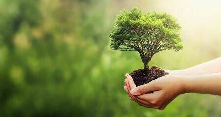 hand holding tree on blur green nature background. concept eco earth day