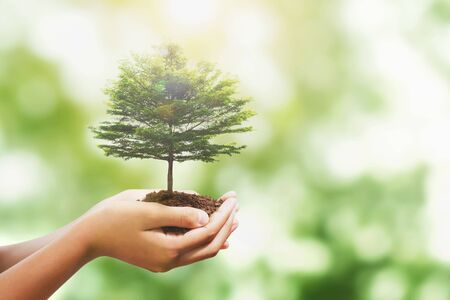 hand holding tree with sunlight in nature background. concept save world and enevironment earth day Imagens - 132069179