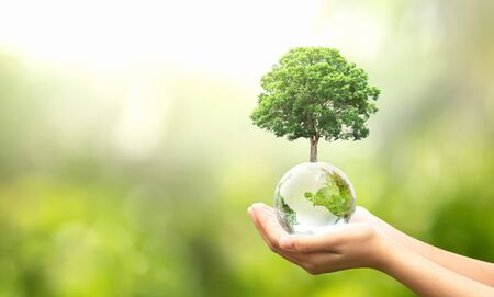 hand holding glass globe ball with tree growing and green nature blur background. eco concept Stockfoto