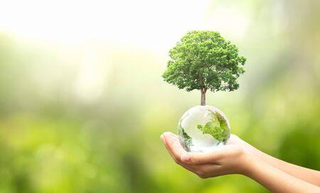 Mano que sostiene la bola del globo de cristal con el crecimiento de árboles y la naturaleza verde desenfoque de fondo. concepto ecológico