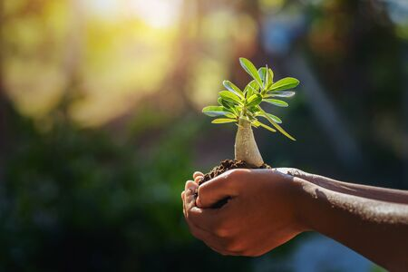 hand holding small tree in morning light. concept save world