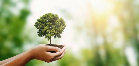 main de femme tenant un arbre sur fond de nature verte floue. concept eco jour de la terre