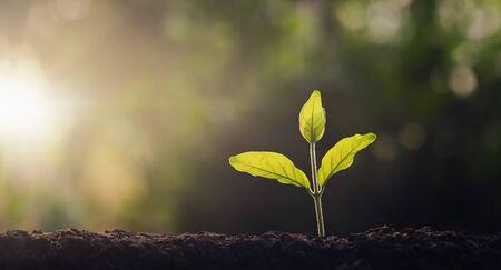 pequeño árbol que crece en el jardín con luz de la mañana. concepto eco y salvar la tierra Foto de archivo