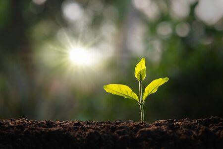 kleine boom groeit in de tuin met ochtendlicht. concept eco en red de aarde Stockfoto