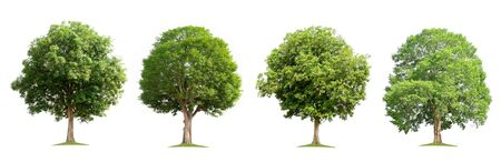 set collection tree isolate on white background Stockfoto