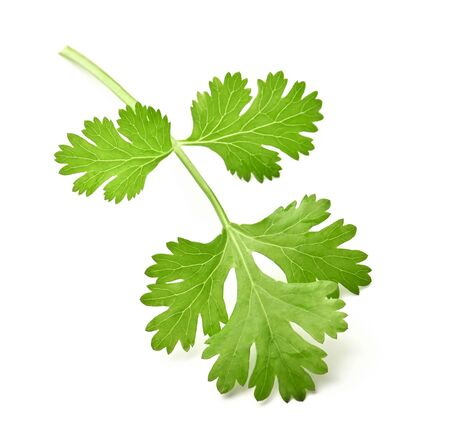 green leaf coriander isolate on white background Stockfoto