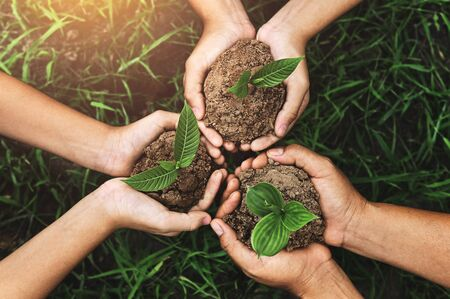 three hand holding young tree for planting. nurture Environmental concept Stockfoto
