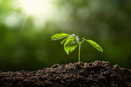 small tree growing on soil in garden with sunshine. eco environment concept