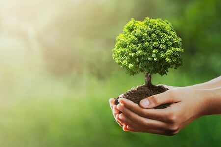 hand holding tree on green nature with sunshine background. evironment eco earth day concept Stockfoto