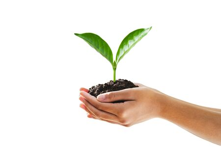 hand holding young plant isolate on white background