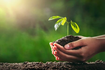 hand holding small tree for planting in gardren. concept green world