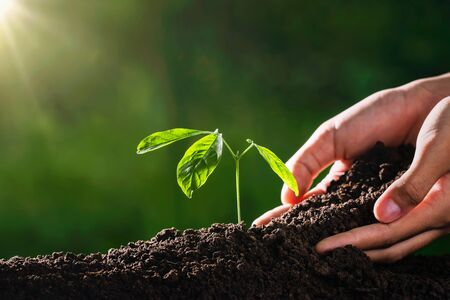 plant growing with hand and sunshine in garden. eco environment concept Stockfoto