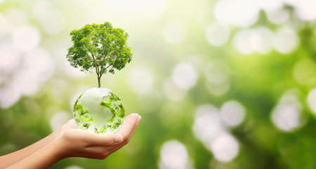 hand holding glass globe ball with tree growing and green nature background. eco environment concept Stockfoto