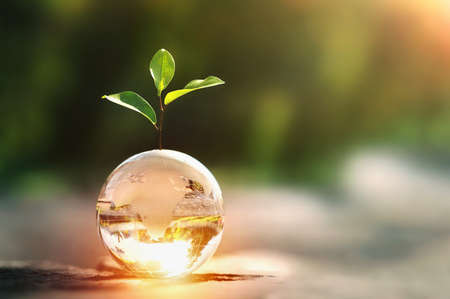 glass globe ball with tree growing and green nature blur background. eco earth day concept