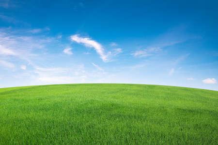 green grass field with blue sky ad white cloud. nature landscape background Standard-Bild