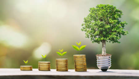 idea of money growing step with tree. concept finane and accounting. plant growth on coins Standard-Bild