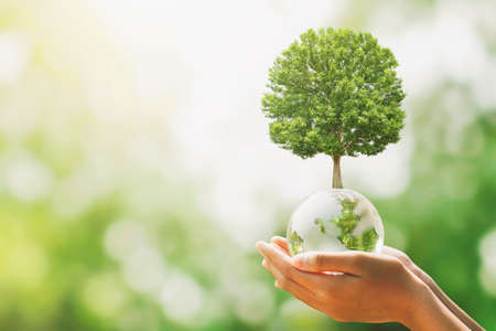 hand holding glass globe ball with tree growing and green nature blur background. eco concept Standard-Bild