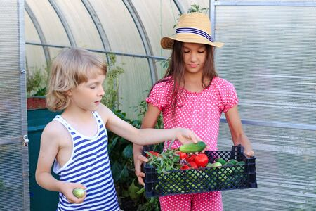 A boy and a girl coming out of a greenhouse with a basket of fresh vegetables. Happy harvesting concept. Summer vacations in a countryside