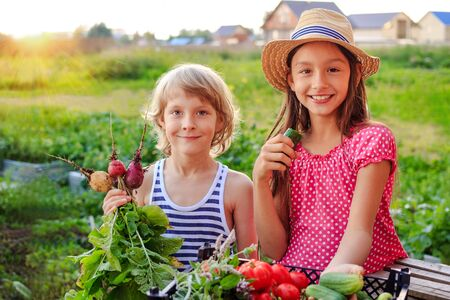 Happy girl eating a cucumber and a boy with fresh radishes and other vegetables in a garden. Summer vacation in a countryside. Archivio Fotografico