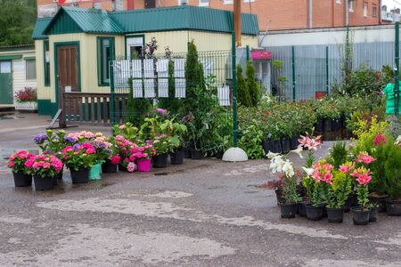 Plant nursery growing and selling different garden plants. Green business concept