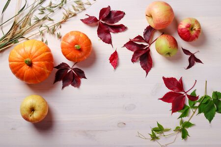Thanksgiving food background with pumpkins, apples, wheat, oats and autumn leaves on white wooden table with space for text