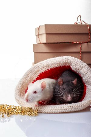 Two rats white and black in christmas hat on white background. Chinese new year of rat symbol, zodiac sign of 2020