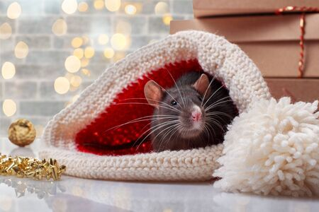 Chinese new year rat with festive decorations. Zodiac symbol of year 2020 Archivio Fotografico