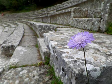 teatro antiguo: Una flor p�rpura en un teatro antiguo, Grecia Foto de archivo