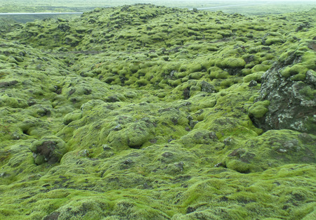lava field: Stunning View of Moss Covered Lava Field along the road of Iceland, Background, Pattern