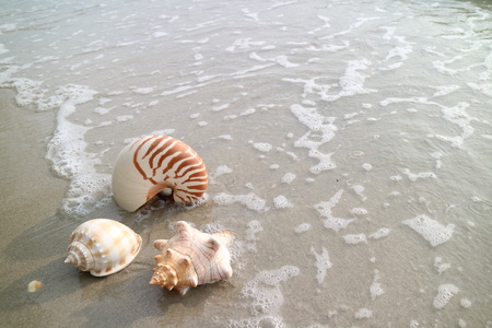 Three types of natural seashells on the beach with the wave swash, Thailand